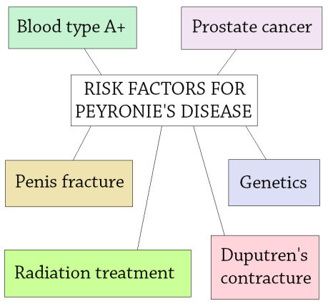 Risk Factors Peyronies Disease