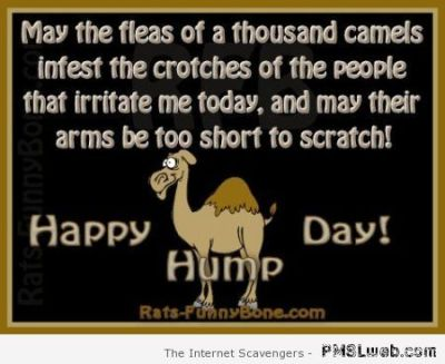 funny camel hump day meme - Hump Day Funnies