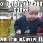 Hump Day Funnies