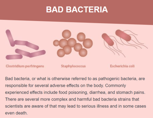 Bad bacteria, or what is otherwise referred to as pathogenic bacteria, are responsible for several adverse effects on the body. Commonly experienced effects include food poisoning, diarrhea, and stomach pains. There are several more complex and harmful bad bacteria strains that scientists are aware of that may lead to serious illness and in some cases even death.