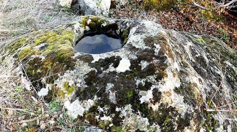 Помала карпа со издлабен сад во близина