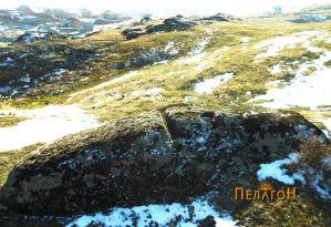 Култивирана карпа