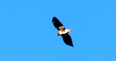 Птица и небо