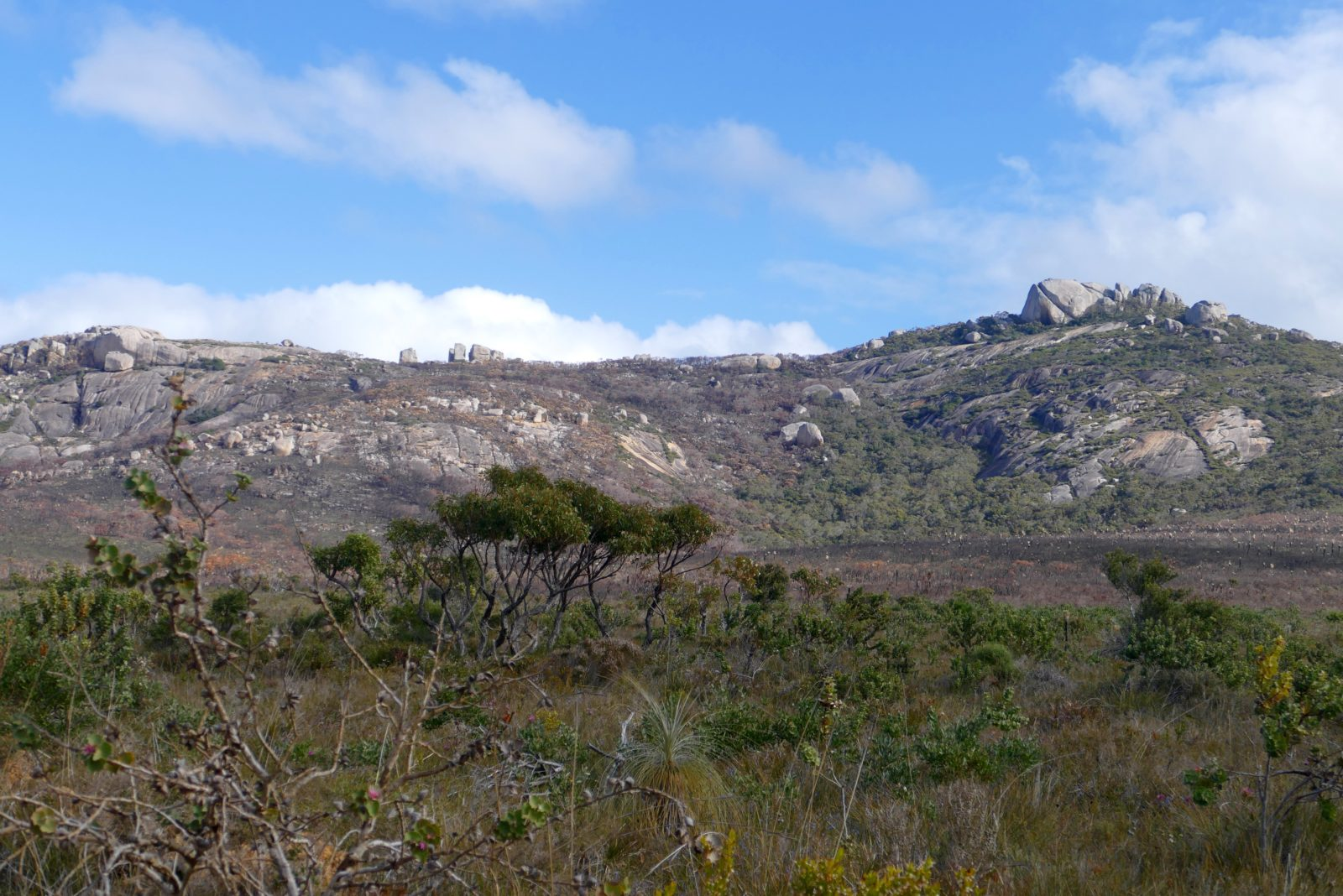 Waychinicup, Spring 2016, looking across to eastern flanks of Mount Manypeaks.