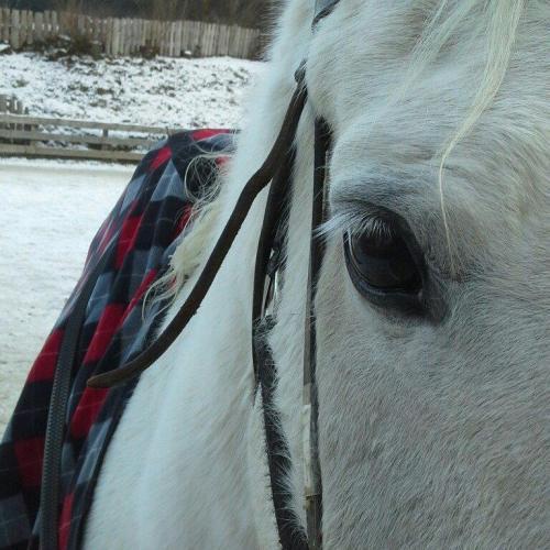 passeggiata-cavallo-pellizzano-centro-equitazione-alpina