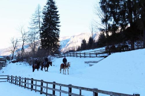 passeggiate-pellizzano-cavallo-centro-equitazione