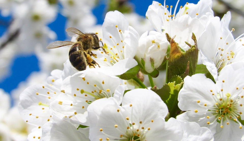 fiori-pellizzano-valdisole