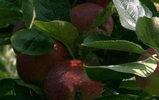 afbeelding uit crowdfunding video fruitteler
