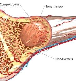 how pemf therapy promotes bone tissue regeneration [ 1280 x 640 Pixel ]