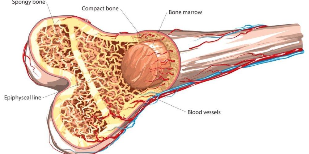 medium resolution of how pemf therapy promotes bone tissue regeneration