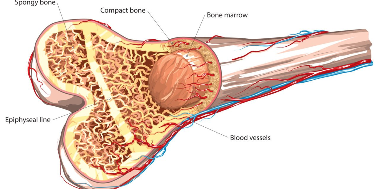 hight resolution of how pemf therapy promotes bone tissue regeneration