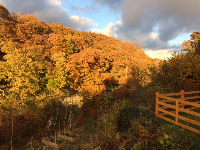 The view from outside the front door, facing right towards Betws y Coed