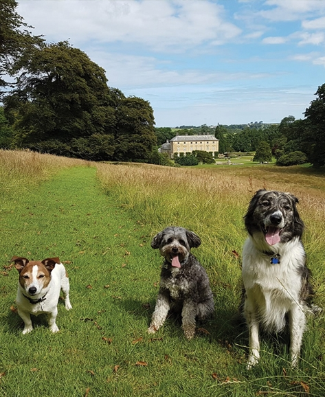 Woodland walks for dogs in cornwall