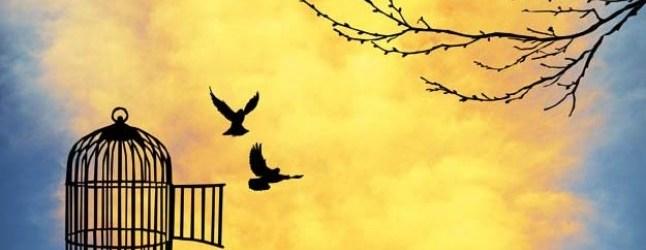 Köşe Yazısı   İfade Özgürlüğü – Sultangül AYYILDIZ