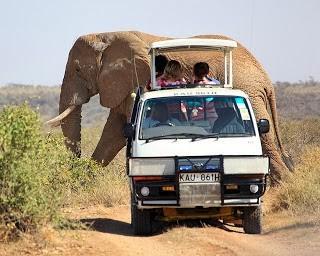 Big Elephant Passing Safari Van Kenya Safari