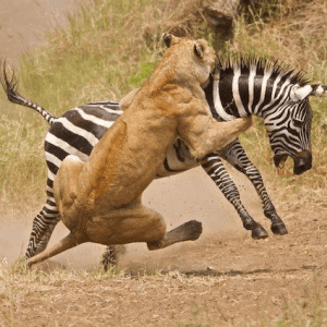 Killing in action - More game drives