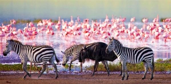 Lake Nakuru wildlife | Penfam Tours and Safaris