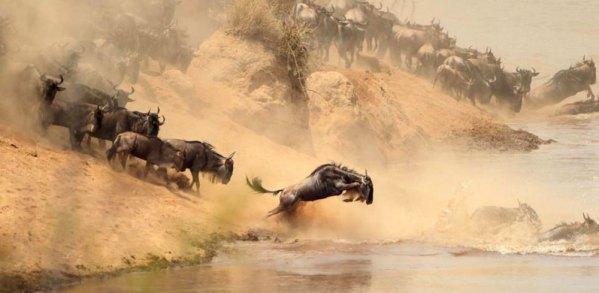 Masai Mara Safari Wildebeest migration Kenya Tanzania
