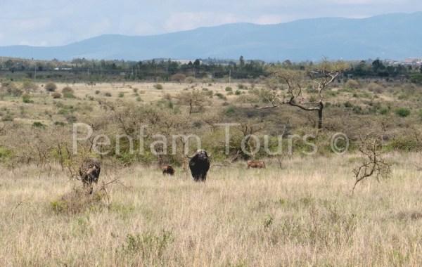 Nairobi National Park Tour animals