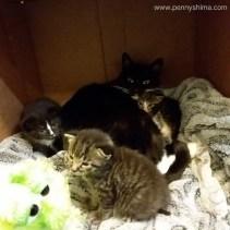 2017-04-13-Kittens-with-mum