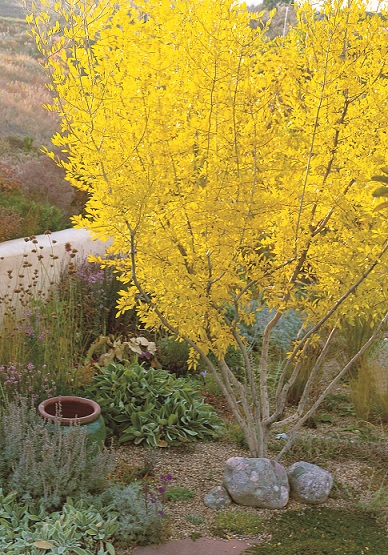 Read This Waterwise Plants for Sustainable Gardens  Digging
