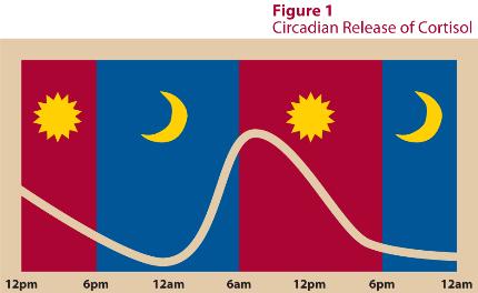 circadian_rhythm_chart
