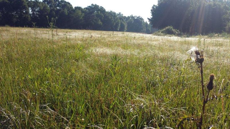 dew-soaked field