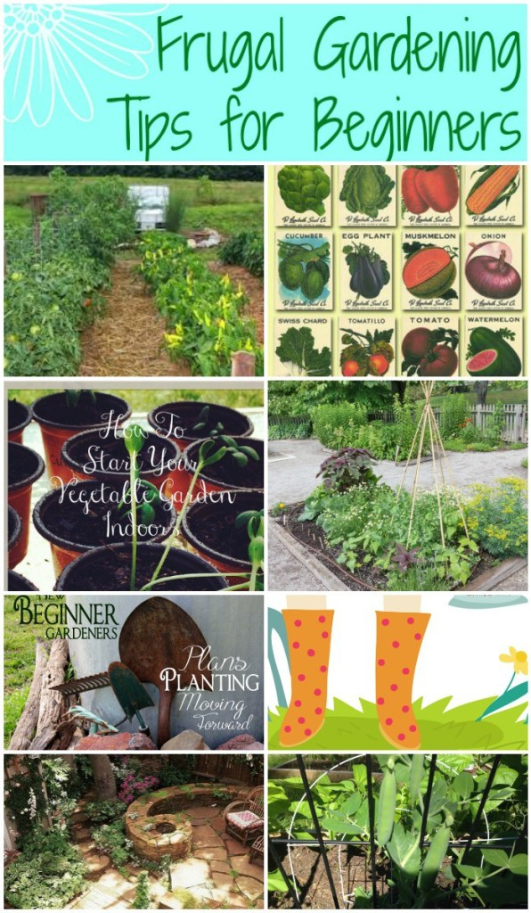 Frugal Gardening Tips For Beginners Pin