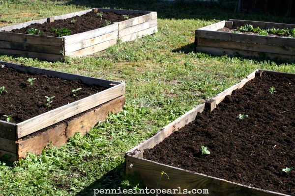 ... How To Make Your Own Pallet Wood Raised Garden Or Planter Beds    Penniesintopearls.com