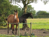 Horses Grazing at livery in Harrogate with Pennine View Stud