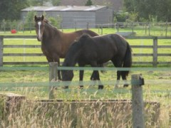 Relaxed horses grazing in well fenced paddocks at livery in Harrogate with Pennine View Stu