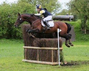 Z Concorde - 2003 Sport Horse Stallion - Horse Trials Cross Country