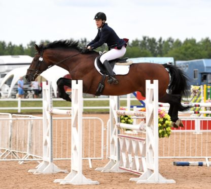 Z Concorde Sport Horse Stallion Arena UK Showjumping 2018