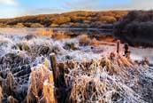 River Cree Winter