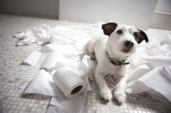 Dog with paper napkins and leaves