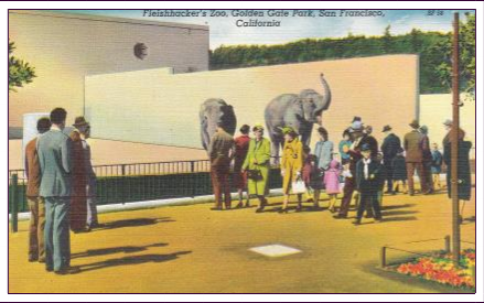 Postcard Corner – San Francisco Zoo