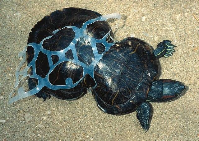Resultado de imagem para Ilha do Lixo do Pacífico