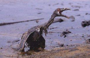 Resultado de imagem para derramamento de petroleo