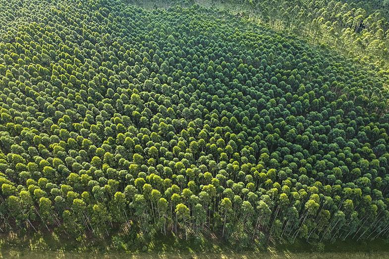 Investimento em florestas plantadas pode ser mais atraente que renda fixa - Pensamento Verde