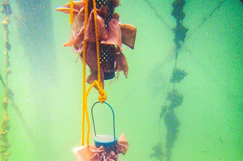 Microplásticos marinhos viram lares para micróbios - Pensamento Verde