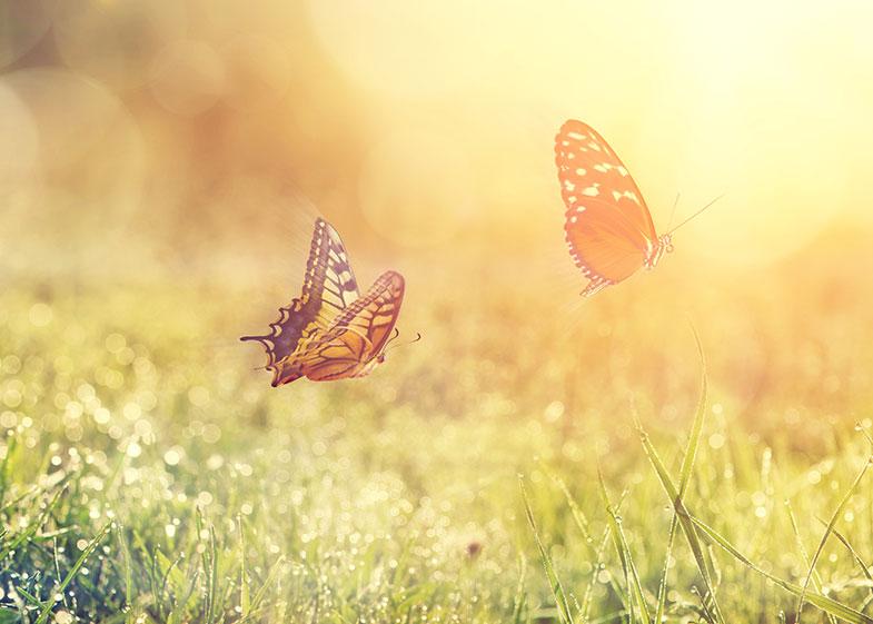 Seis curiosidades incríveis sobre as borboletas - Pensamento Verde