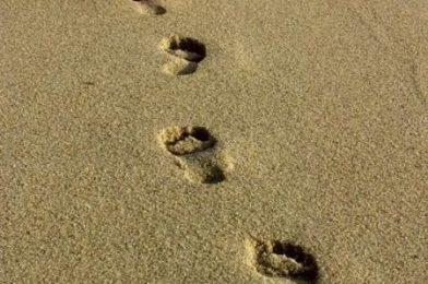 Caminante son tus huellas el camino y nada más…