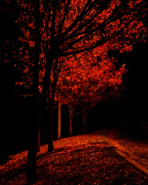 Free Fall Tree Wallpaper Fall Tree At Night Pentaxforums Com