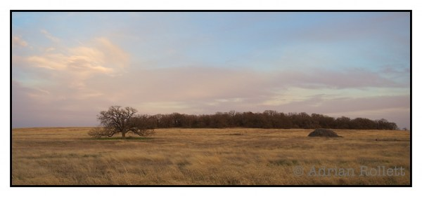 north texas landscape