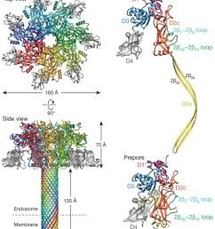 pentelute lab mit atomic structure of anthrax protective antigen pore elucidates toxin translocation  [ 946 x 1150 Pixel ]