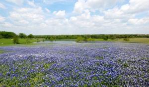 Texas0011