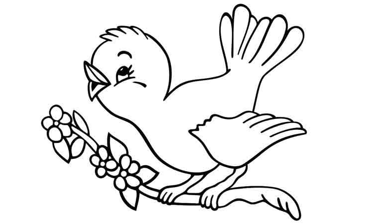 Sketsa Mewarnai Gambar Burung
