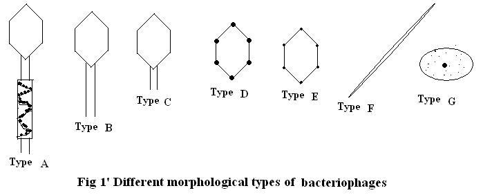 Introduction to botany Viruses