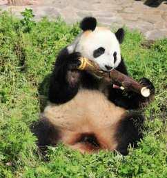 panda home [ 1200 x 800 Pixel ]