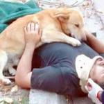 Dog refuse to leave injured owner's side until help arrives
